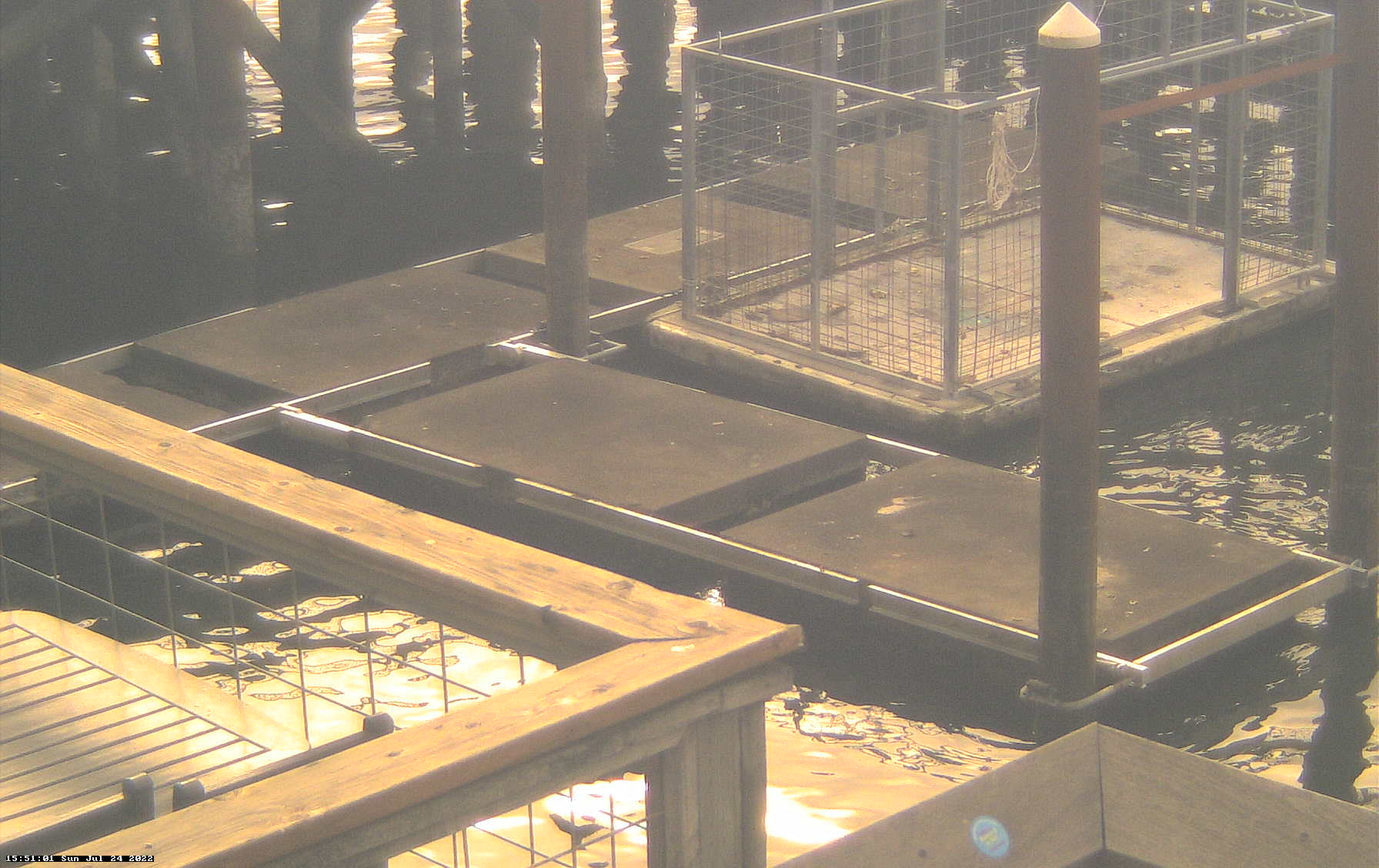 Sea Lion Webcam at Newport's Port Dock 1